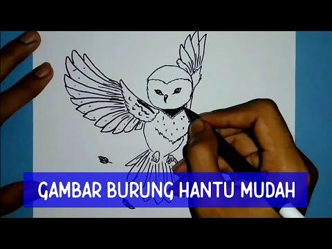 Cara Menggambar Burung Hantu Yang Mudah Youtube