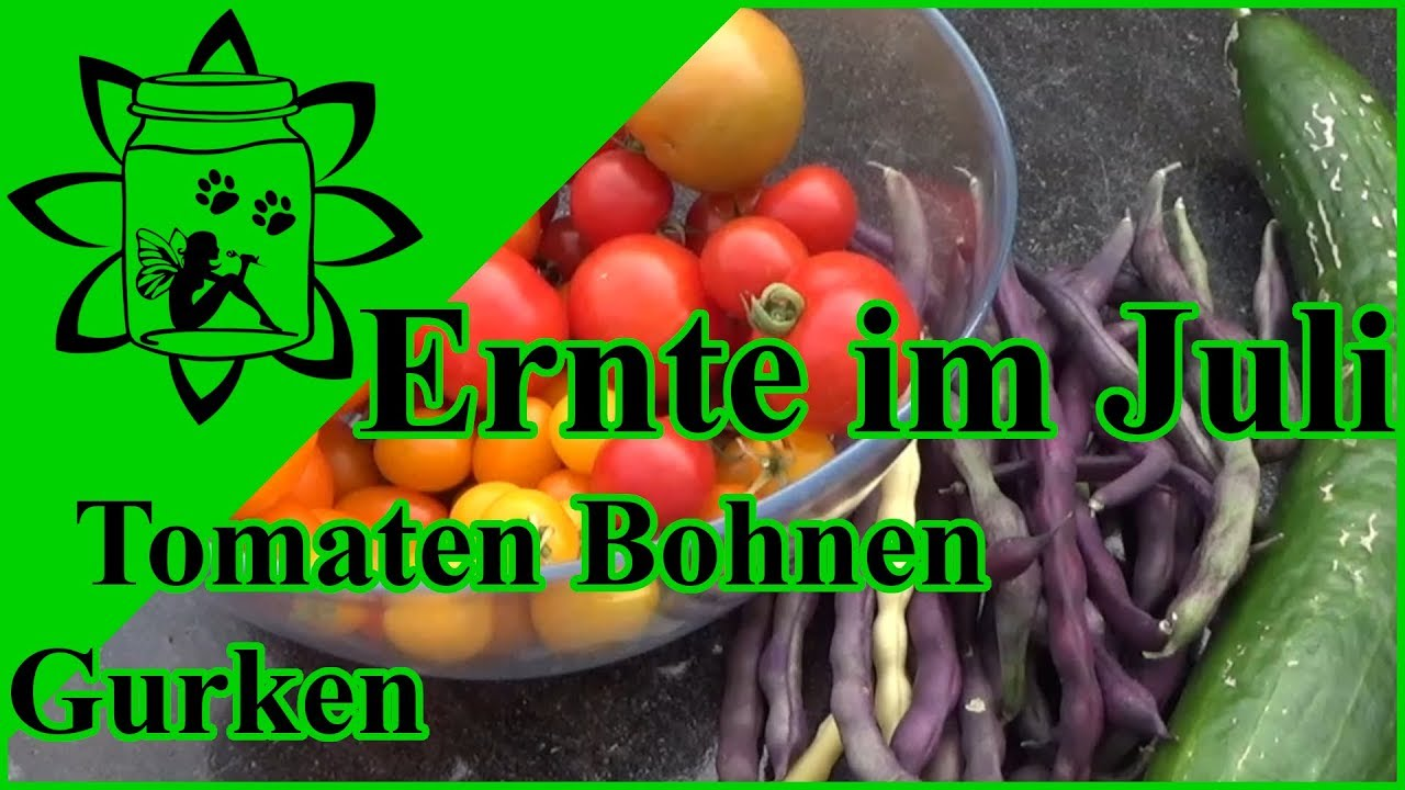 ernte im juli tomaten gurken bohnen garten gem se aus t pfen und hochbeet youtube. Black Bedroom Furniture Sets. Home Design Ideas