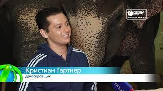 В цирке показали Шоу слонов  Новости Кирова 28 01 2019