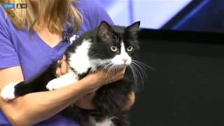 SNOOPY - Fox 13 Best Friend from the Humane Society of Utah