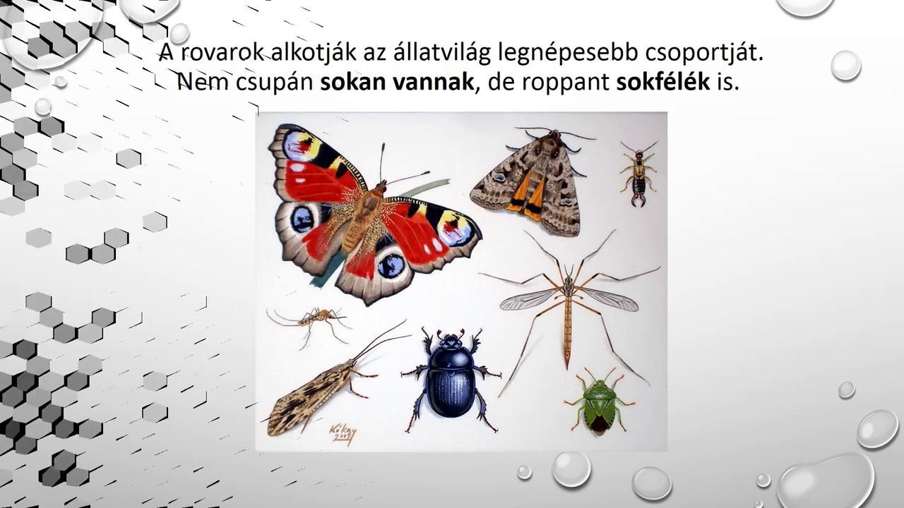 féregkészítményekből gyógynövényekből)