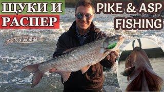 PIKE and ASP Fishing by Niki & Georgi/ Риболов на ЩУКА и РАСПЕР/ Hecht- und Rapfenangeln