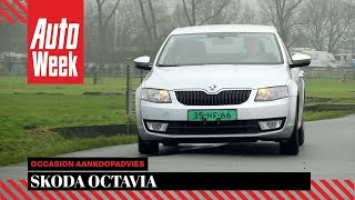 Skoda Octavia - Occasion Aankoopadvies