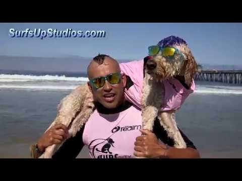 Surf Dog Board Swap AMAZING! Surfing Dogs San Diego Tom Petty I'm Learning to Fly