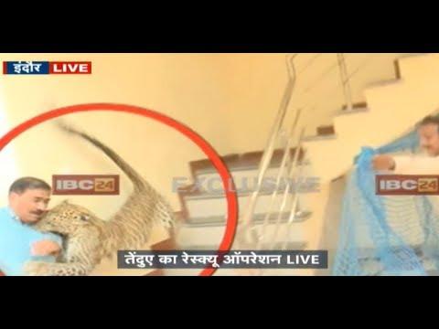 Indore MP: दिनदहाड़े घर में घुसा तेंदुआ | देखिये तेंदुए का आतंक