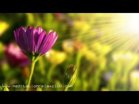 LIFE SOUNDS NATURE Relaxing Spa Music and Instrumental Natural Sounds 3 HOURS