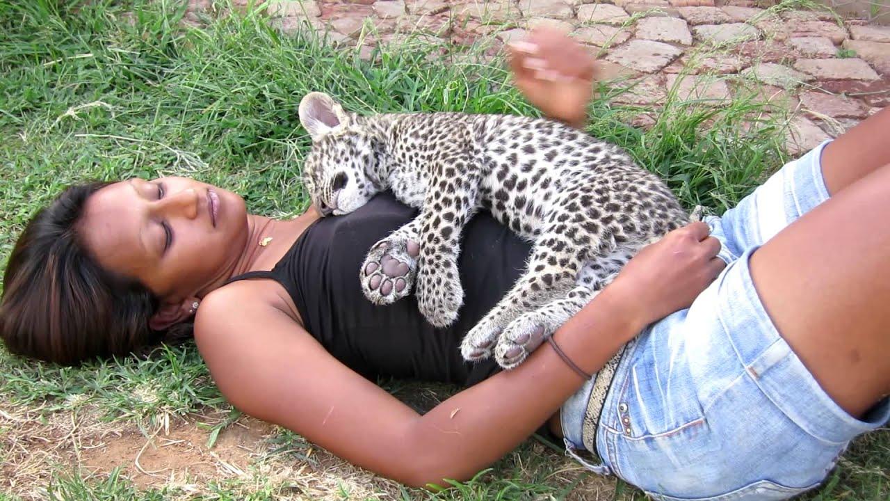 sleeping baby leopard cheetah experience bloemfontein youtube