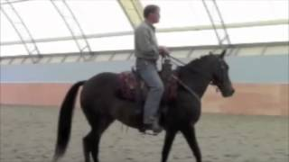 Mark Russell Natural Dressage: beginning biomechanics for the horse
