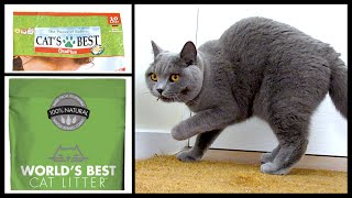 CATS TRY CLUMPING LITTER! | CHRIS & EVE