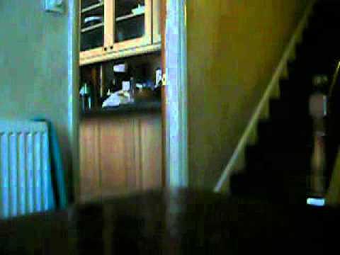 Bertie opening the kitchen door...