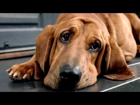 FRONTLINE Plus ยาหยอด เห็บ หมัด สุนัข