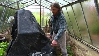 Holzwurmbekämpfung, Holzwurmtod im Treibhaus unter schwarzer Folie