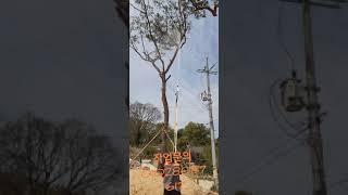 경북벌초달인★★각종나무 약치기 해충 퇴치기  많은 문의…