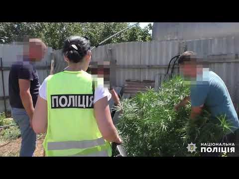 Поліція Миколаївщини: Вітовський район. Вилучення коноплі та канабісу