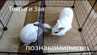 Знакомим кроликов