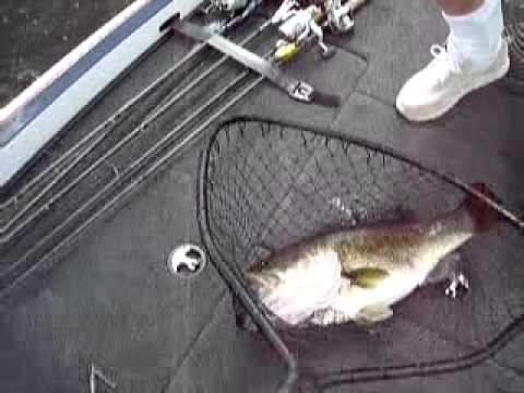 Florida Bass Fishing-Giant bass caught on video!