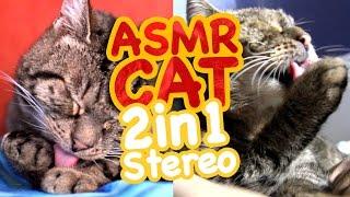 ASMR Cat - 2in1Stereo