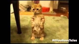 cute cat looks like the cat from Shrek!!