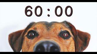 60 Minute Timer for School and Homework  Dog Bark Alarm Sound