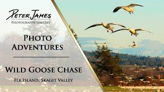WILD GOOSE CHASE - Photo Adventure Ep1
