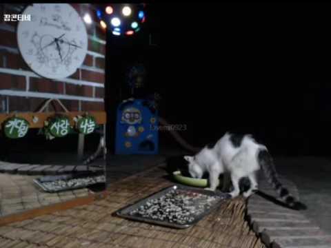 Cats Meok Bang : Stray Cats in South Korea [팝콘티비 BJ도둑고양이 나비월드]  160821 어르신 오전5시15