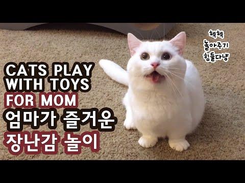 꼬부기 엄마가 즐거운 장난감 놀이 CATS PLAY WITH TOYS FOR MOM