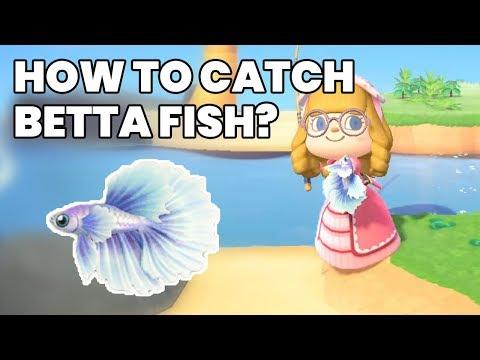 Betta Fish Animal Crossing New Horizons: How To Get? Location, Sell Price & Spawn Hours