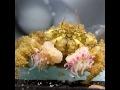 Boxer crabs fight over sea anemones