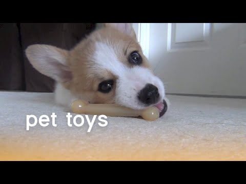 Pet Toys (Playful Pets) | The Pet Collective