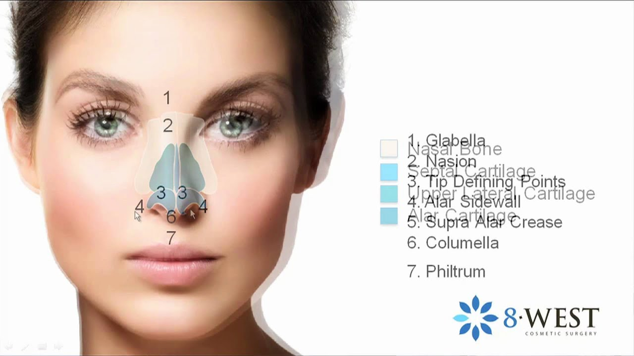 Rhinoplasty Cosmetic Roadmap Of The Face The Nose Anatomy Form