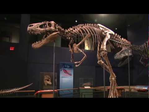 NIU researchers discover T-Rex