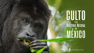 Culto a la Historia Natural de México - Teaser - ORIGINAL