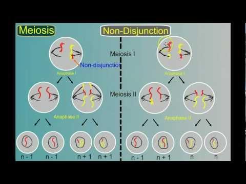 Genetics Part 4: Mutations