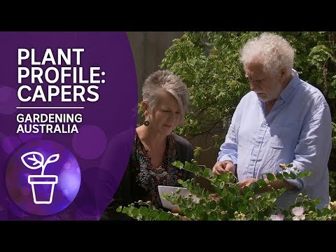 Plant Profile: How to grow, pick and preserve capers