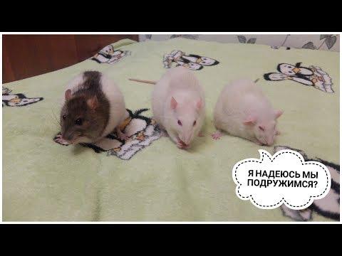 Вопрос: Откуда берутся паразиты у домашних животных, которых не выгуливают?
