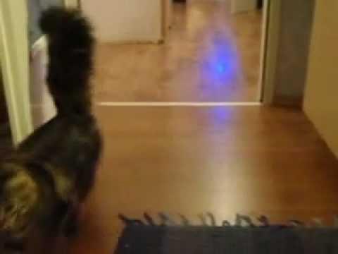 Katze Im Fleischrausch (sehr Gefährlich!!) Cat In Blood Rushing (dangerous!!!)