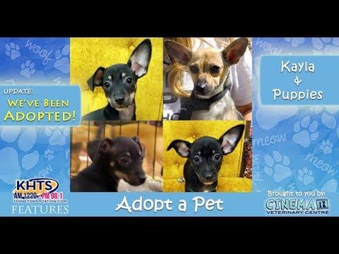 Adopt A Pet: Kayla And Puppies, Shelter Hope Pet Shop Santa Clarita - KHTS Features - Santa Clarita