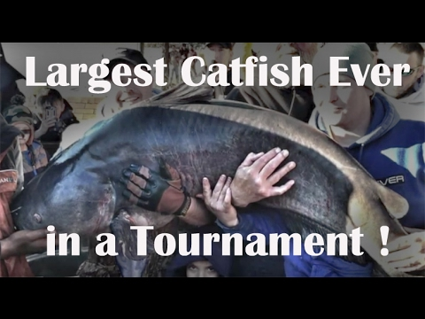 WORLD'S BIGGEST CATFISH EVER CAUGHT from YouTube · Duration:  3 minutes 14 seconds  · 75,000+ views · uploaded on 9/8/2013 · uploaded by Big Fishes of the World