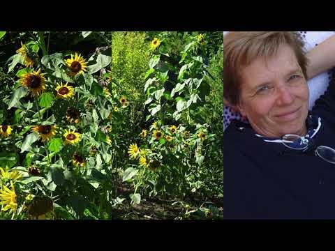 Mein Garten 2019 - Chili