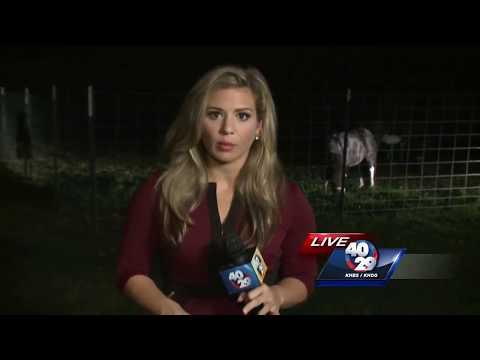 Arkansas Man Accused Of Having Sex With Family's Pet Donkey