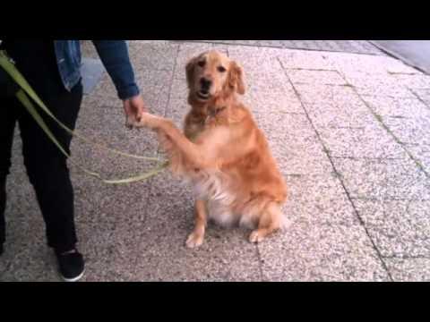 Mischlingshunde in Bad Driburg von YouTube · Dauer:  41 Sekunden