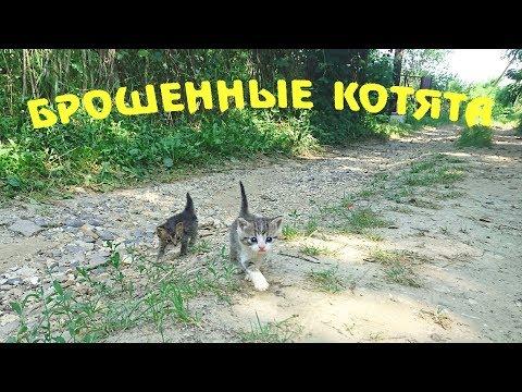Спасение котят. Часть 1