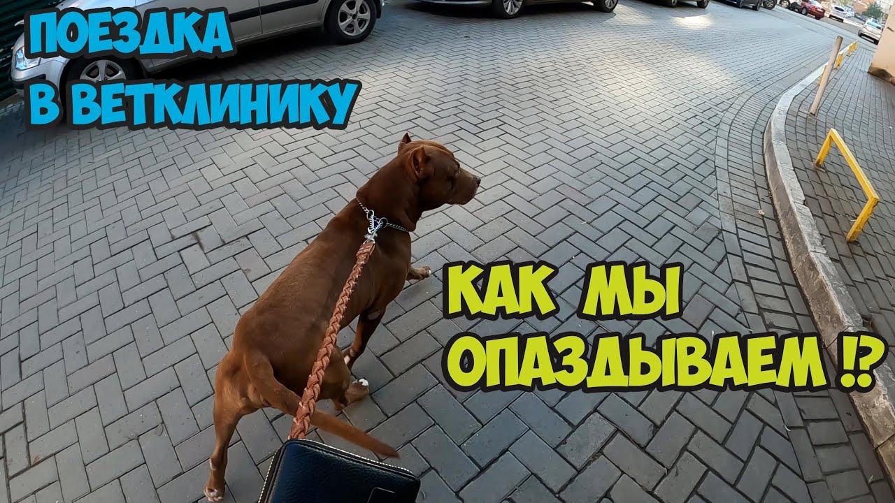 Как мы ехали со Спайком в ветклинику в Краснодар !!! Снова опоздал/Веселая дорога. - скачать с YouTube бесплатно