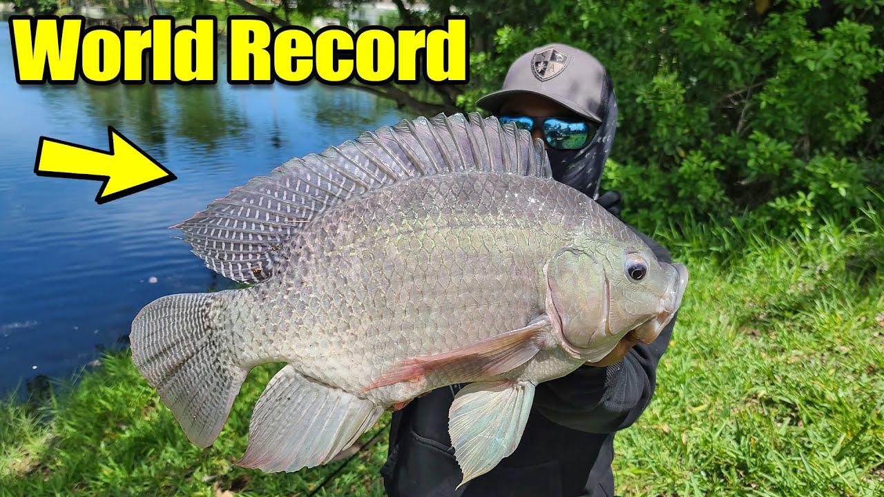 GIANT INVASIVE FISH!!!