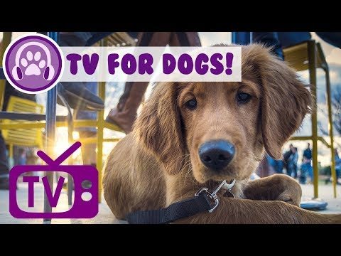 Dog TV: TV for Hyperactive Dogs! Keep Your Dog Entertained and Chilled with this TV and Music!
