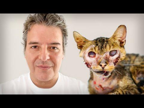 El increíble gato luchador que volvió de la muerte