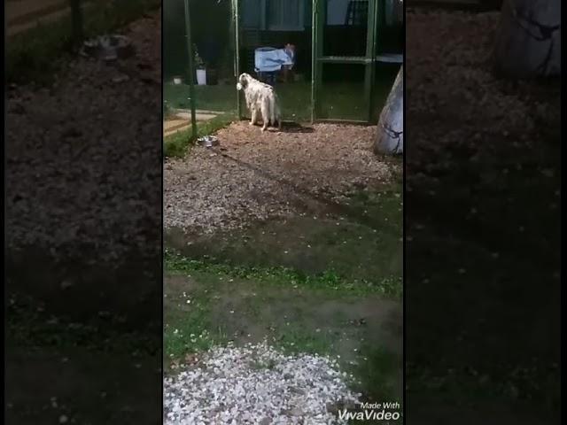 Отбой в зоогостинице