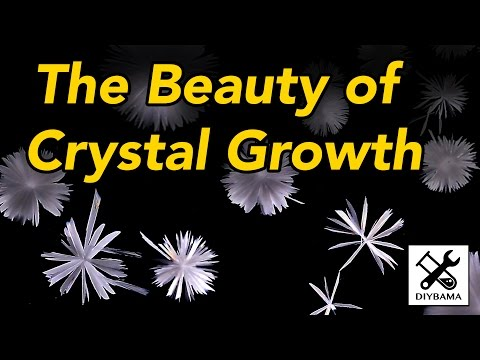 The Beauty of Crystal Growth (Crystallisation of Sodium Acetate)