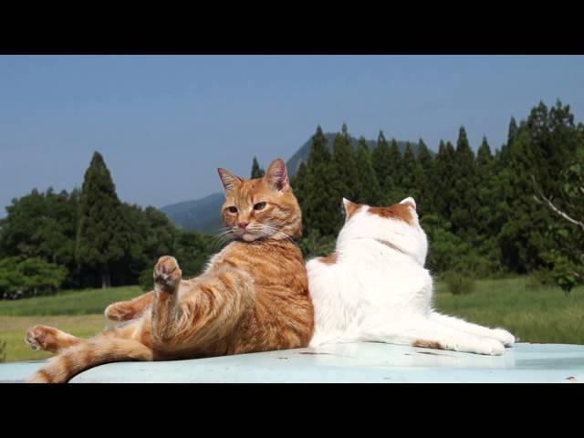 お座り茶トラ Sitting cat 2015#4