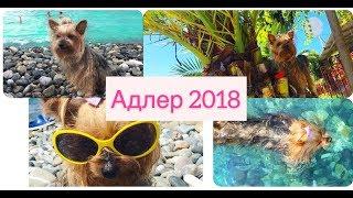 DOG-VLOG/поездка на море с собакой. Адлер 2018